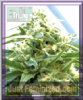 Emerald Triangle Cherry O.G. Feminised 5 Seeds